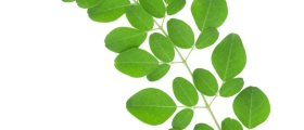 Moringa oleifera: A Review...